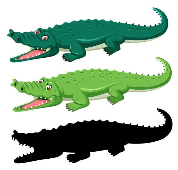 different graphic type of crocodile - alligator stock illustrations