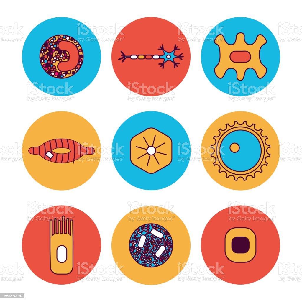 Top Tipos Diferentes De Células Humanas - Arte vectorial de stock y  NA05