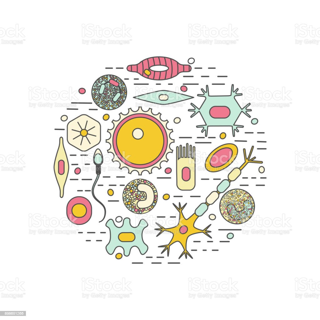 different human cell types vector art illustration