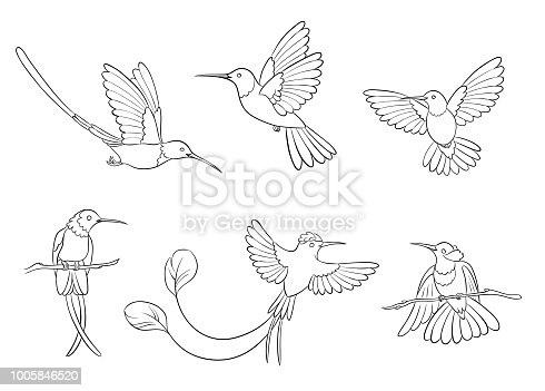 Set of 6 different hummingbirds in contours. Vector illustration. EPS8