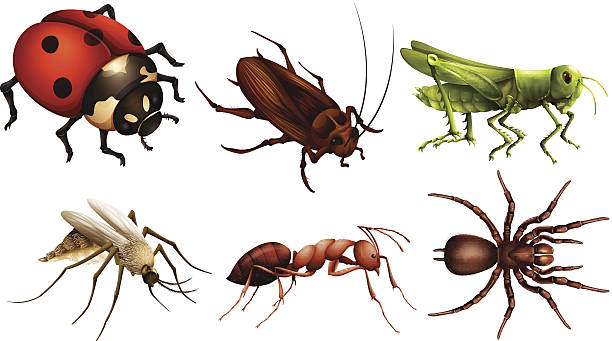 chitin, structure, insect, natural materials, biomaterials ... |Examples Of Exoskeleton Animals