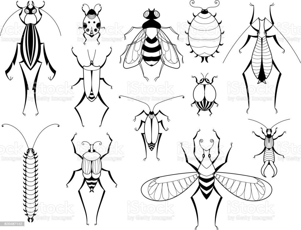 Verschiedene Insekten Mit Mustern Auf Flugeln Schmetterlinge Und