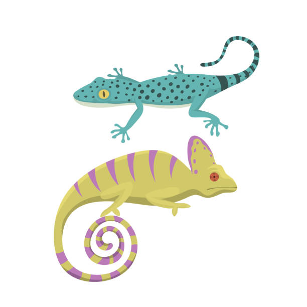 different kind of lizard reptile isolated vector illustration - gecko stock illustrations, clip art, cartoons, & icons