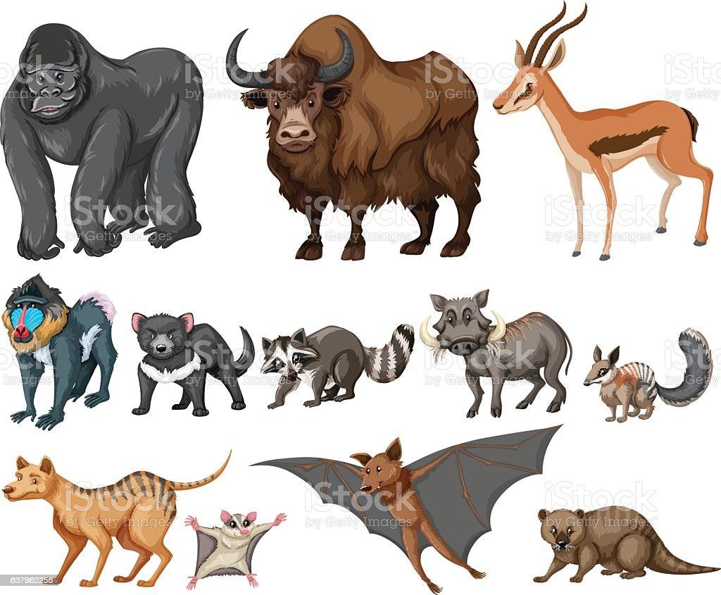 different kind of wild animals on white アライグマのベクターアート