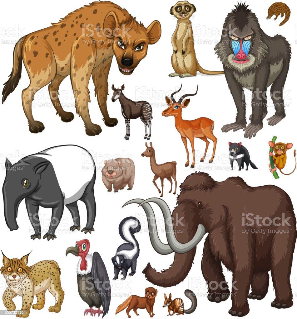 Different kind of wild animals vector art illustration