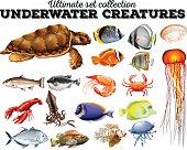 Different kind sea animals