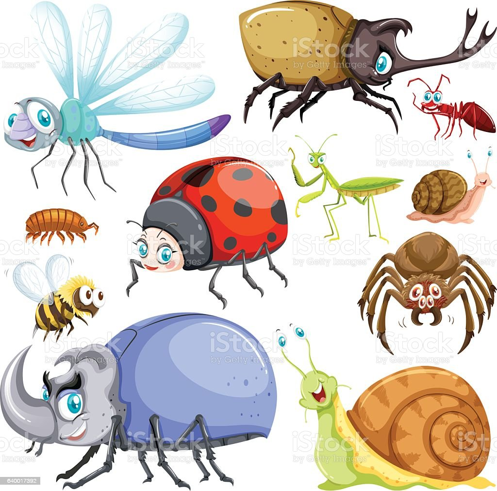 the different types of insecticides Insects, insect images pictures, list of insects, wildlife photos - nature images - naturephoto.