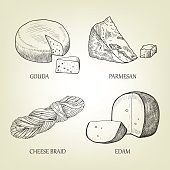 Different kinds of realistic cheese. Graphic vector collection.