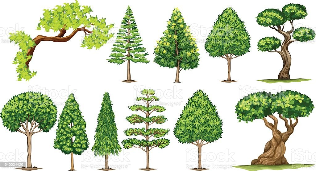 Different kinds of trees - illustrazione arte vettoriale
