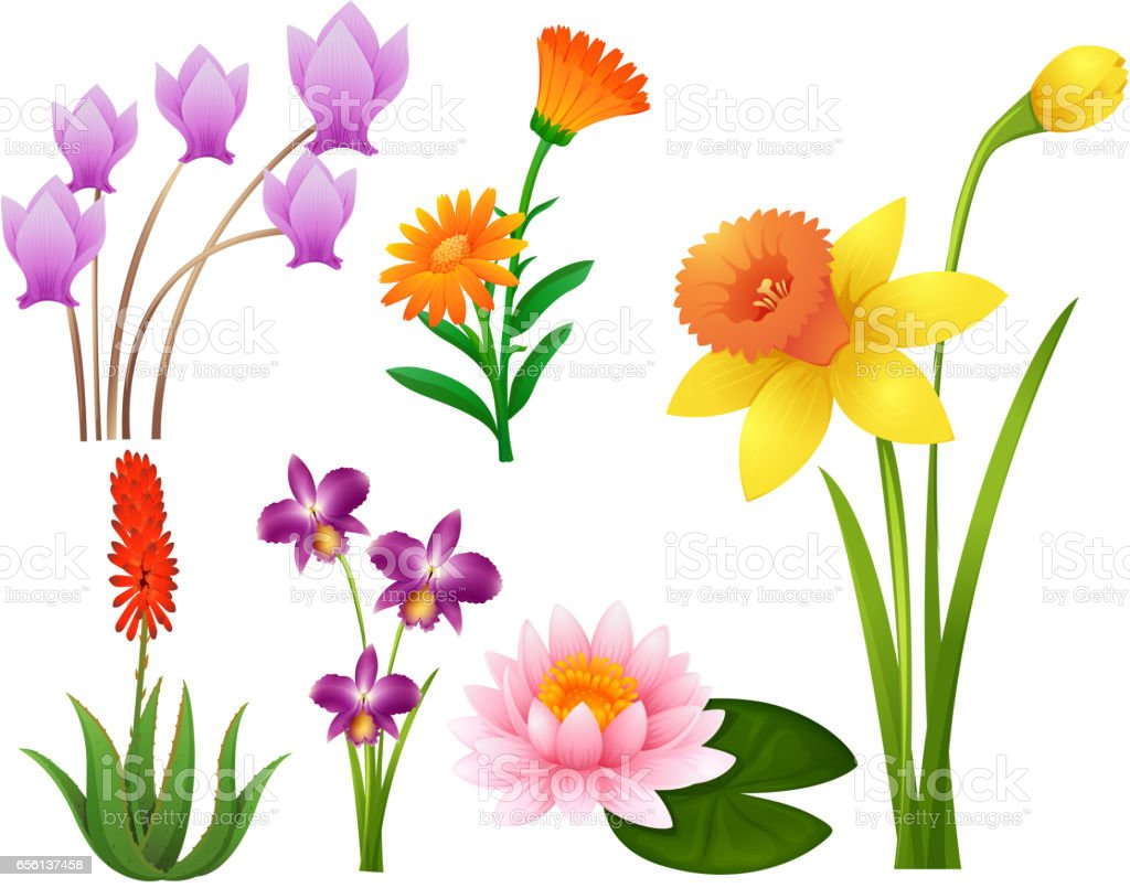 Different Kinds Of Tropical Flowers Stock Vector Art 656137458 Istock
