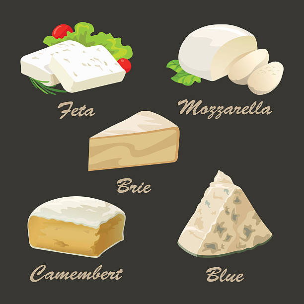 different kinds of white cheese. realistic vector illustration. - 페타 치즈 stock illustrations