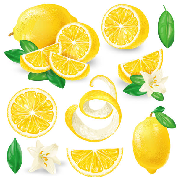 different lemons with leaves and flowers vector - skórka stock illustrations