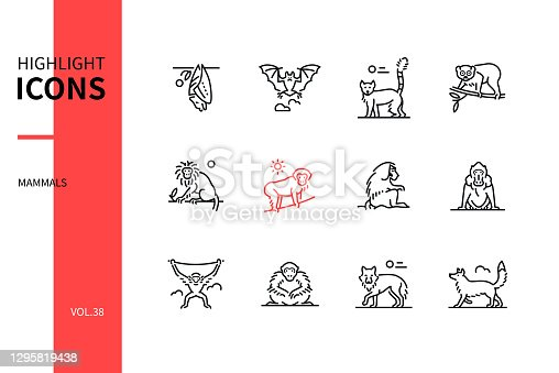 Different mammals - modern line design style icons set. Black and white images. Various animals concept. Bat, lemur, slow loris, tamarin, macaque, hamadryas baboon, mandrill, gibbon, wolf, fox