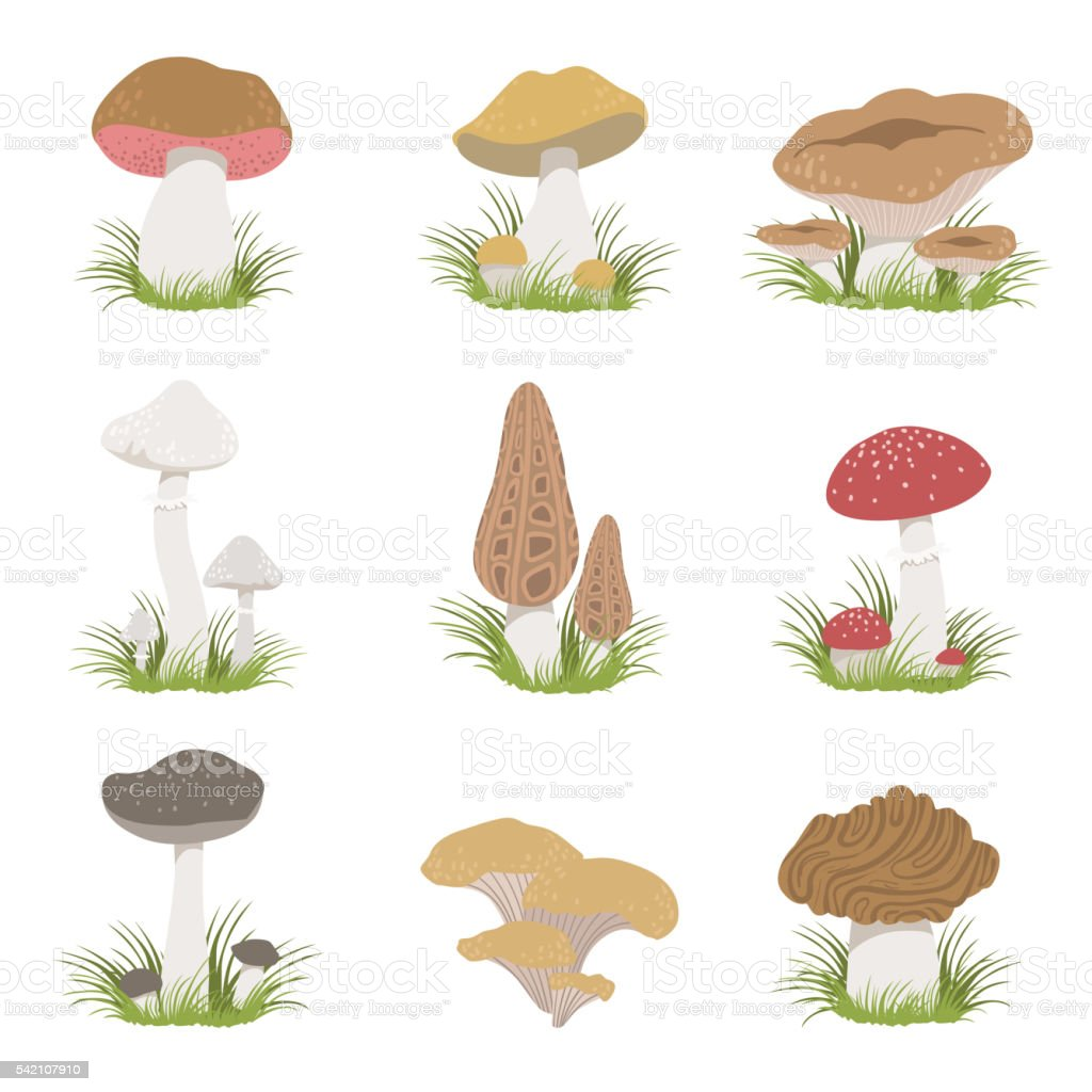 Different Mushrooms Realistic Drawings Set vector art illustration