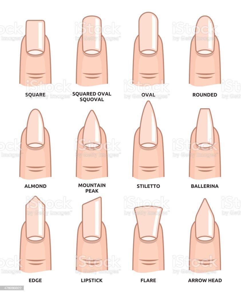 Ilustración De Las Diferentes Formas De Uñasfingernails Moda