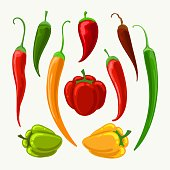 Vector different peppers. Jalapeno and cayenne, paprika and bulgarian papper illustration isolated on white background