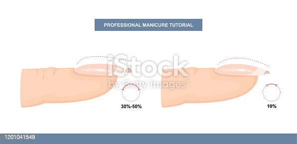 Different Shapes of Nail Plate. Side View. Nail Apex and C-curve. Professional Manicure Guide. Vector illustration