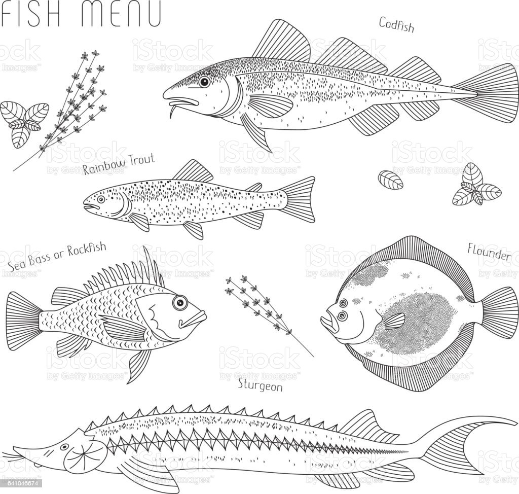 Different species of fish for menu and culinary herbs recipes vector art illustration