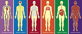 Different systems of human body diagram