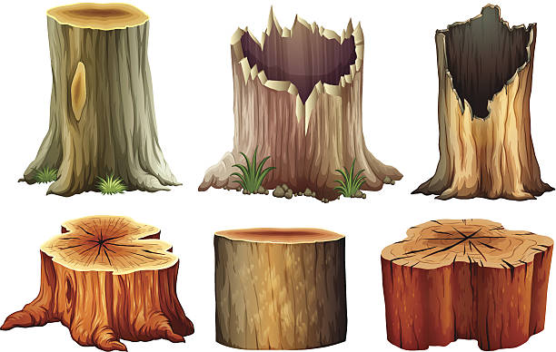 stockillustraties, clipart, cartoons en iconen met different tree stumps - boomstronk