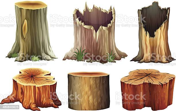 Illustration of the different tree stumps on a white background
