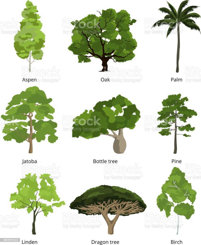 Different trees vector collection and exotic palms for Different types of plants and trees