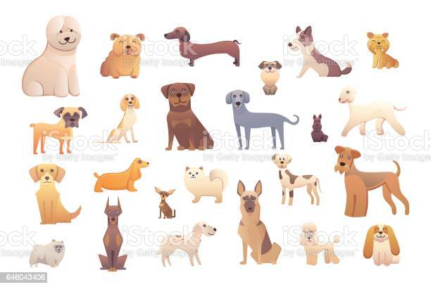 Different type of cartoon dogs happy dog set vector illustration vector id646043406?b=1&k=6&m=646043406&s=612x612&h=pipuibpgydcl1uwf5wo vs16raiwb7lbdqjayzd byy=