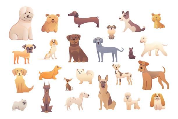 ilustraciones, imágenes clip art, dibujos animados e iconos de stock de diferentes tipos de perros de dibujos animados. perro feliz conjunto ilustración vectorial. - animales de granja