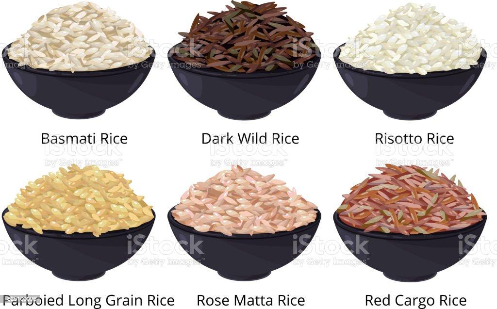 Différents types de riz. À grains longs, brun, blanc et autres. Illustrations vectorielles en style cartoon - clipart vectoriel de Agriculture biologique libre de droits