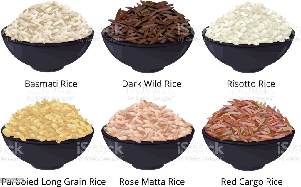 Different type of rice. Long grain, brown, white and other. Vector illustrations in cartoon style vector art illustration