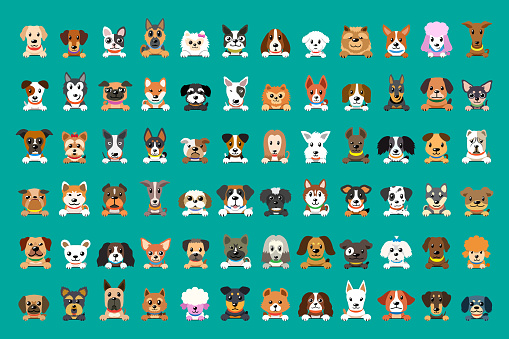 Different type of vector cartoon dog faces