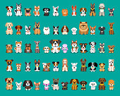 Different type of vector cartoon dogs