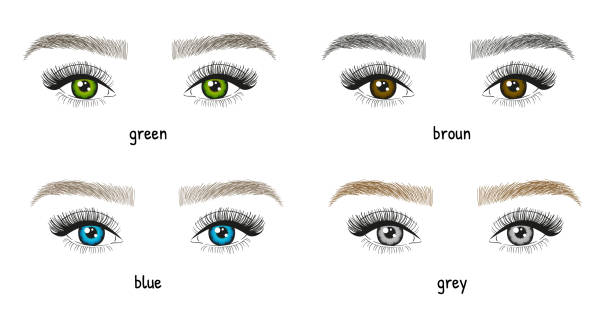 illustrazioni stock, clip art, cartoni animati e icone di tendenza di different types and colors of eyes and eyebrows illustration. woman's eyes with long beautiful eyelashes. - vector - occhi verdi