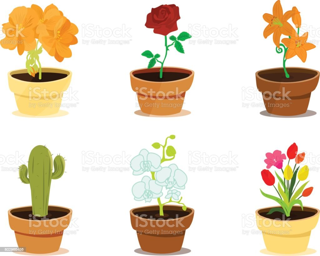 Different Types Of Beautiful Decorative Modern Flowers In Clay Pots