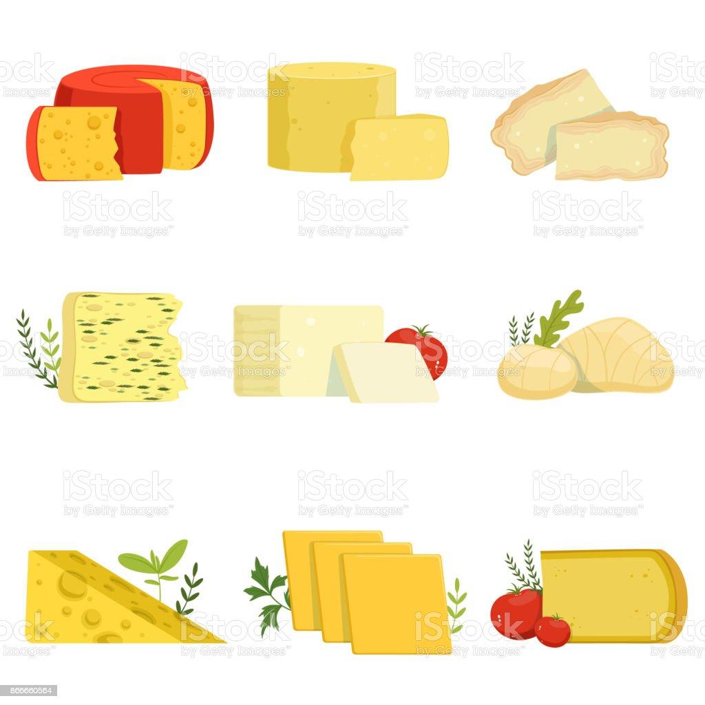 Verschiedene Arten von Käse Stücke, beliebte Art von Käse Vektor-Illustrationen – Vektorgrafik