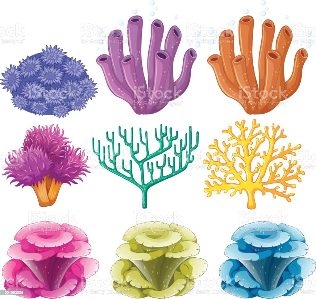 Different types of coral reef vector art illustration