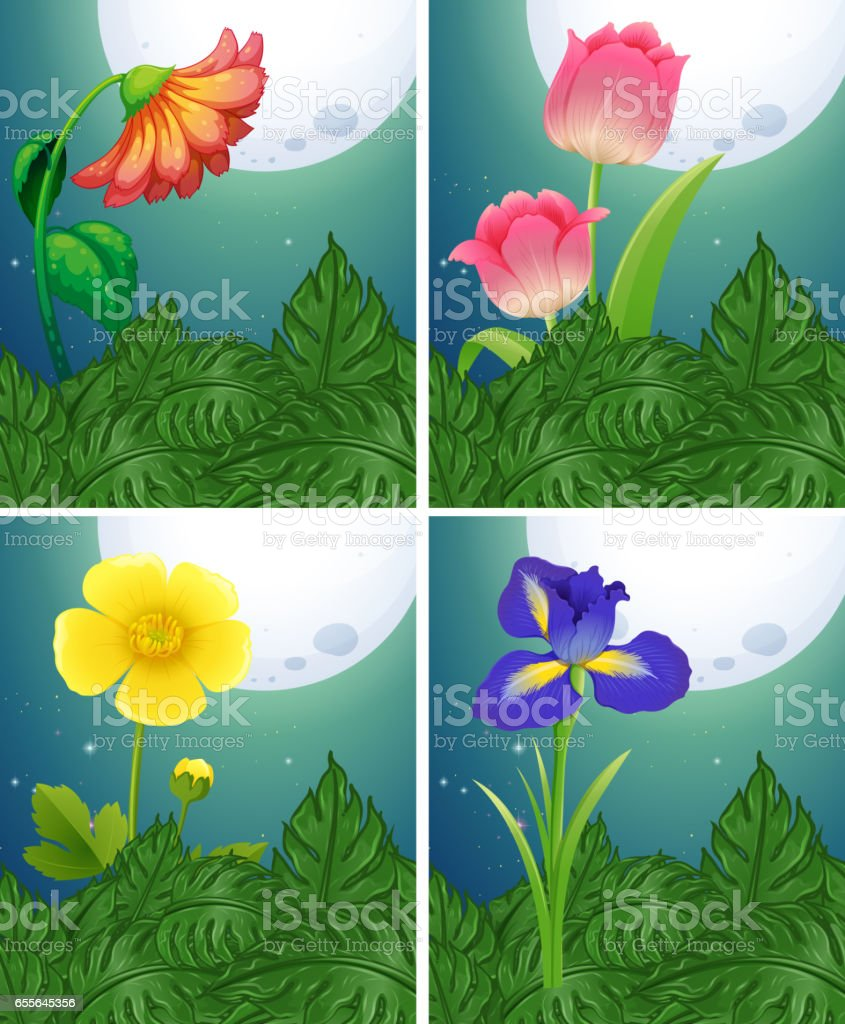 Different Types Of Flowers On Fullmoon Night Stock Vector Art More