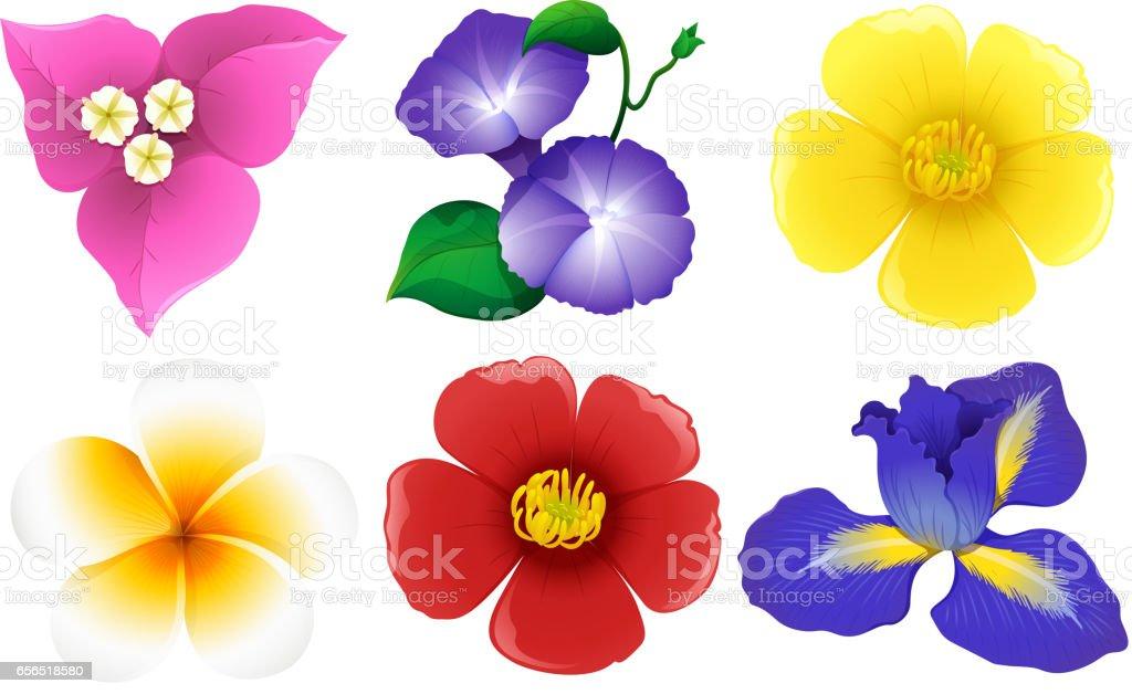 Beyaz çiçek farklı türleri vektör sanat illüstrasyonu