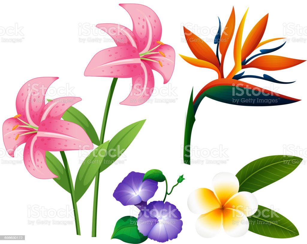 Different Types Of Flowers Stock Vector Art More Images Of Art