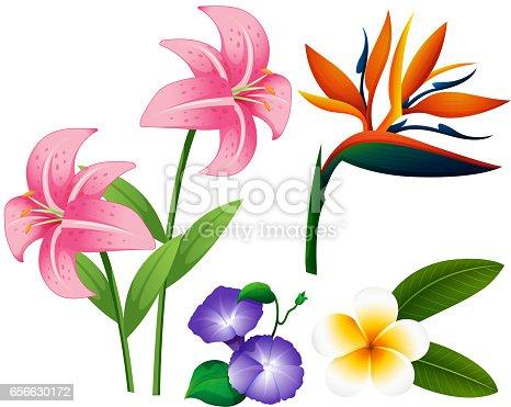 diff rents types de fleurs cliparts vectoriels et plus d 39 images de arbre en fleurs 656630172. Black Bedroom Furniture Sets. Home Design Ideas