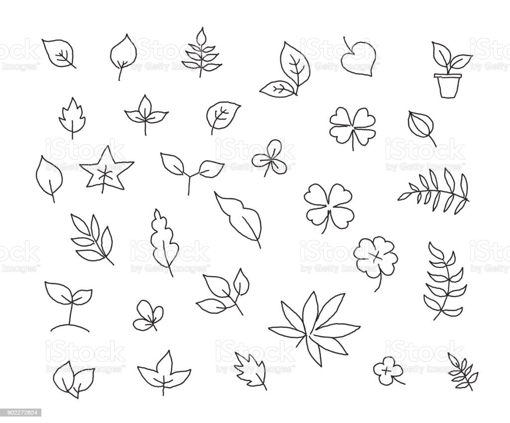 Different Types Of Leaves Set Of Various Species Of Trees And Plants ...