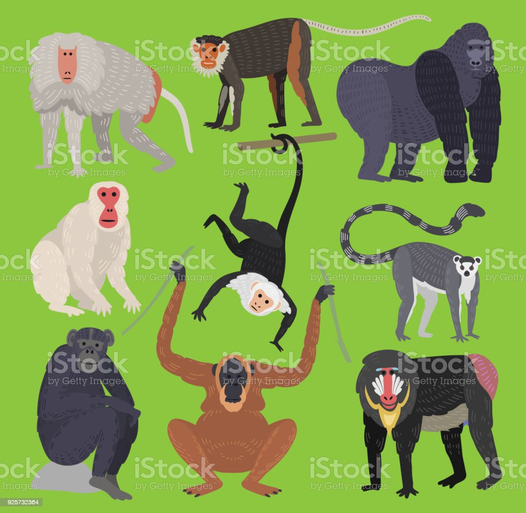 Different Types Of Monkeys Ape Breed Rare Animal Vector