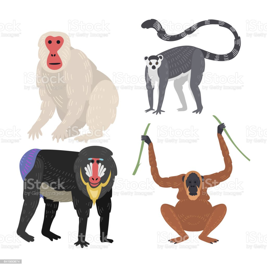 different types of monkeys rare animal vector set stock vector art