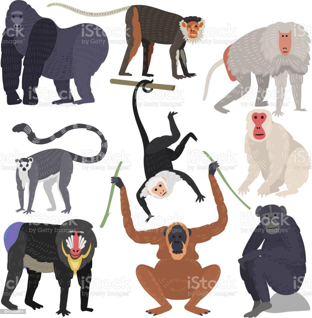 Verschiedene Arten von Affen seltene Tier Vektor-set – Vektorgrafik