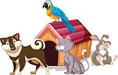 istock Different types of pet around the house 655242712