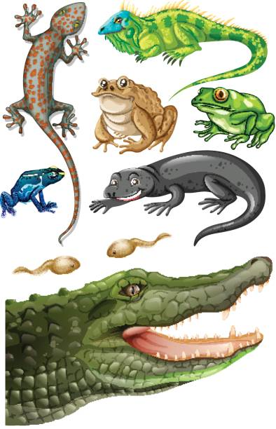 Different types of reptiles vector art illustration