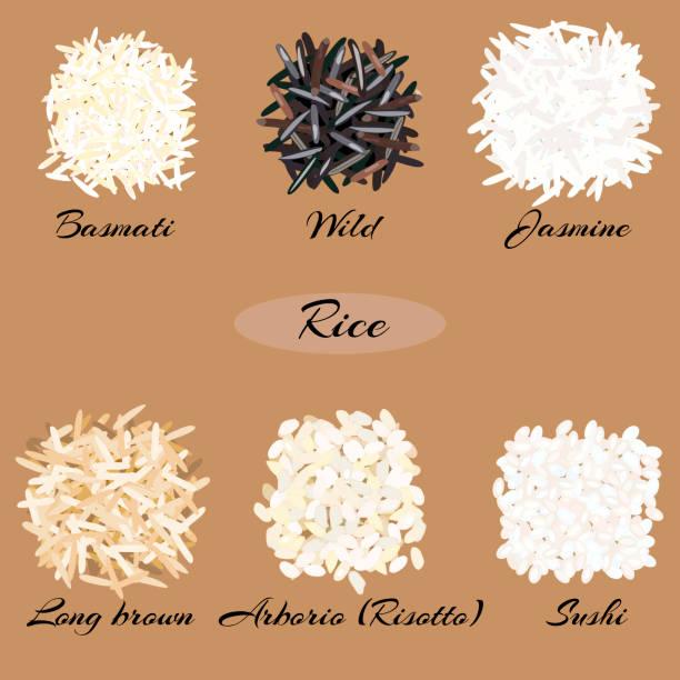 illustrations, cliparts, dessins animés et icônes de différents types de riz. - risotto