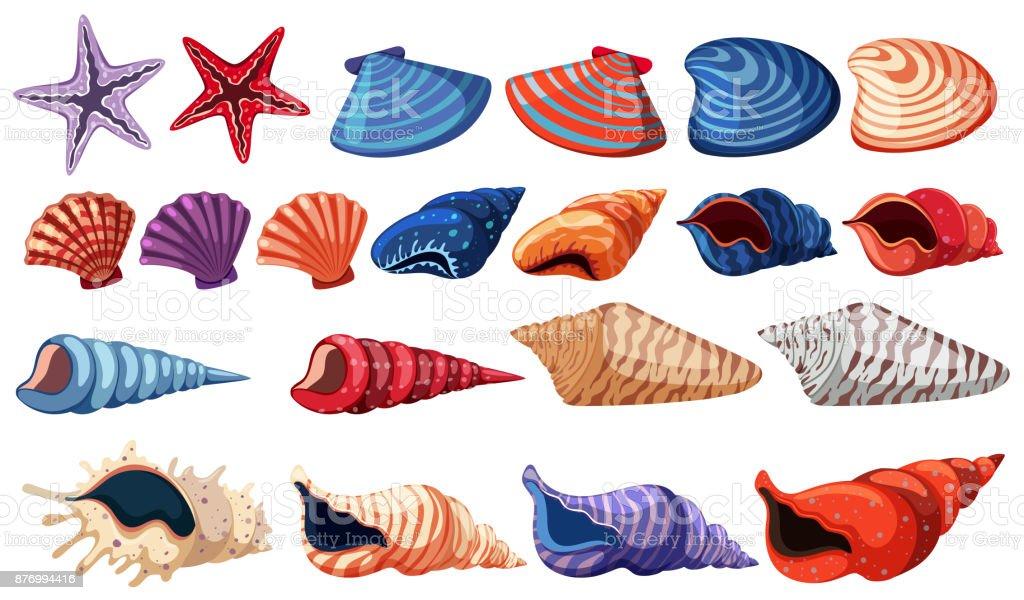 Different types of seashells on white background vector art illustration