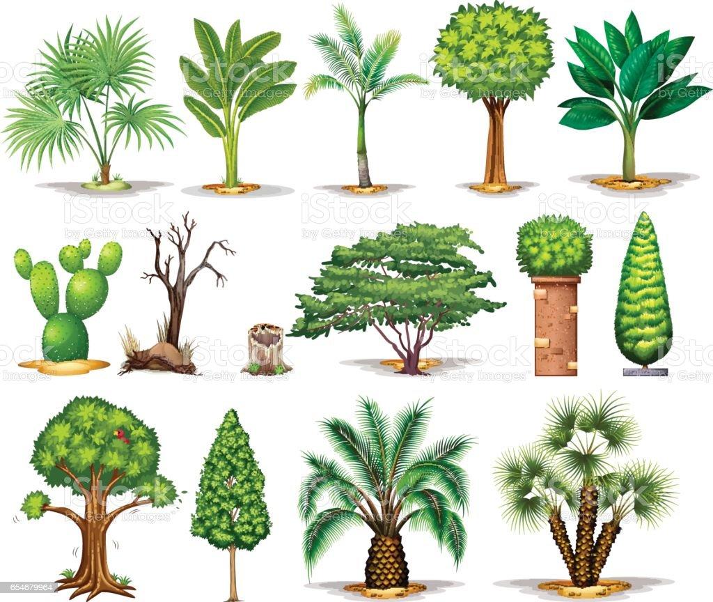 Verschiedene Arten Von Bäumen Lizenzfreies Verschiedene Arten Von Bäumen  Stock Vektor Art Und Mehr Bilder Von