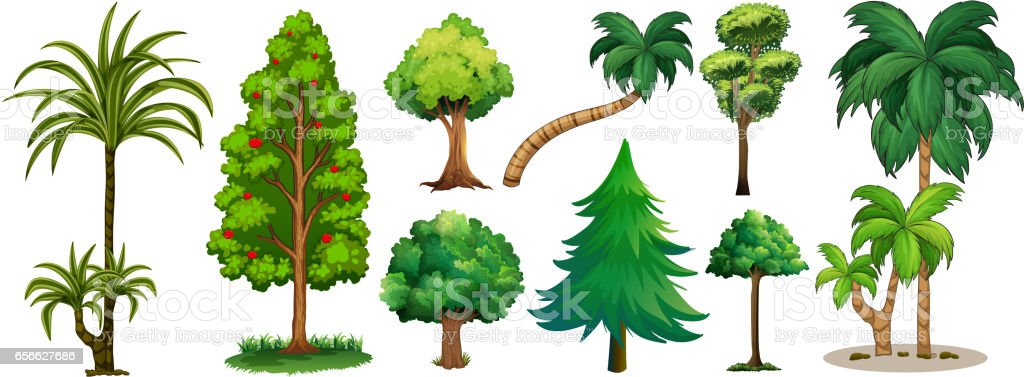 Different types of trees stock vector art 656627686 istock - Fruit trees every type weather area ...